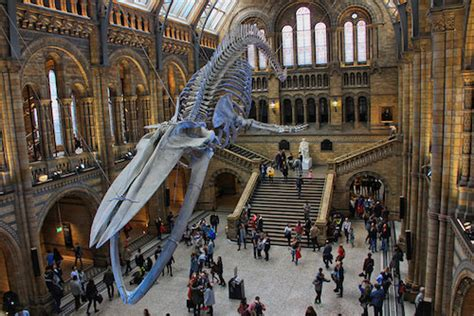 Natural History Museum London   EuroCheapo's Budget Travel