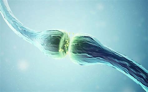 Acetylcholine: The Neurotransmitter With Many Functions