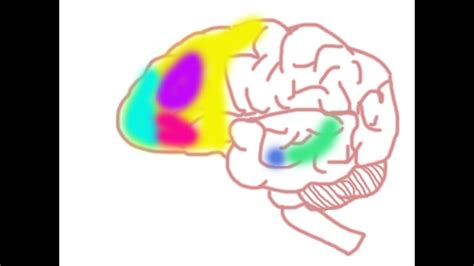 Your Brain on Social Anxiety Disorder - YouTube