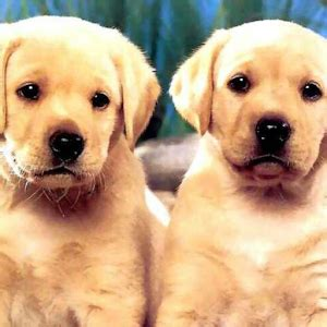 Dog Twins Puzzle - Android Apps on Google Play