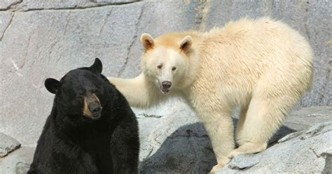 Can You Name These Different Species Of Bears? | Playbuzz