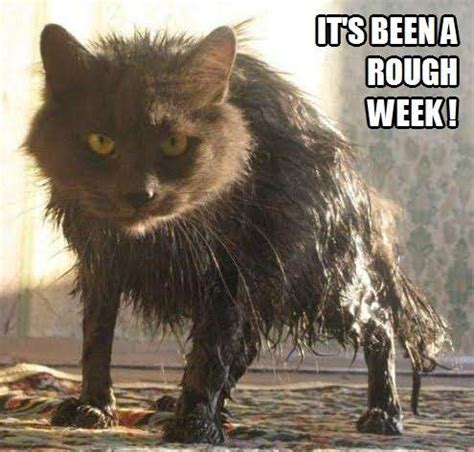 It's been a rough week!   Kittyworks